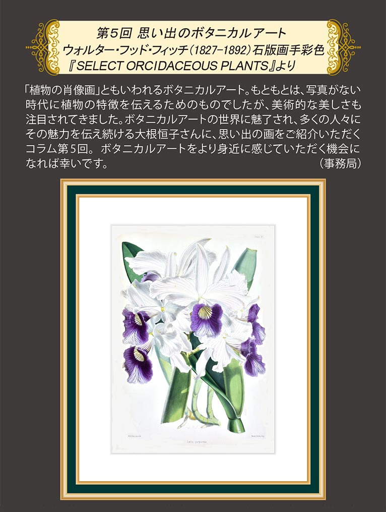 JGN NEWS LETTER 2021年早春号 Vol.14(その3) 第5回 思い出のボタニカルアート ウォルター・フッド・フィッチ(1827-1892)石版画手彩色『SELECT ORCIDACEOUS PLANTS』より JGN創立メンバー オランジェリー・コレクション 代表 大根 恒子氏