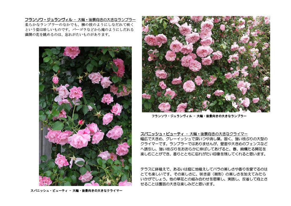 JGNメンバーズジャーナル【ガーデナーの泉】 2020年12月16日配信 バラの樹形を楽しむ<その2> ローズアドバイザー、JGN創立メンバー 田中敏夫氏