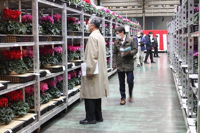 一般社団法人 日本花き生産協会主催 2020年度 第54回全国花き品評会 シクラメン部門 群馬県 石川花園 石川英司さんの'ピアス'がジャパン・ガーデナーズ・ネットワーク賞を受賞されました。