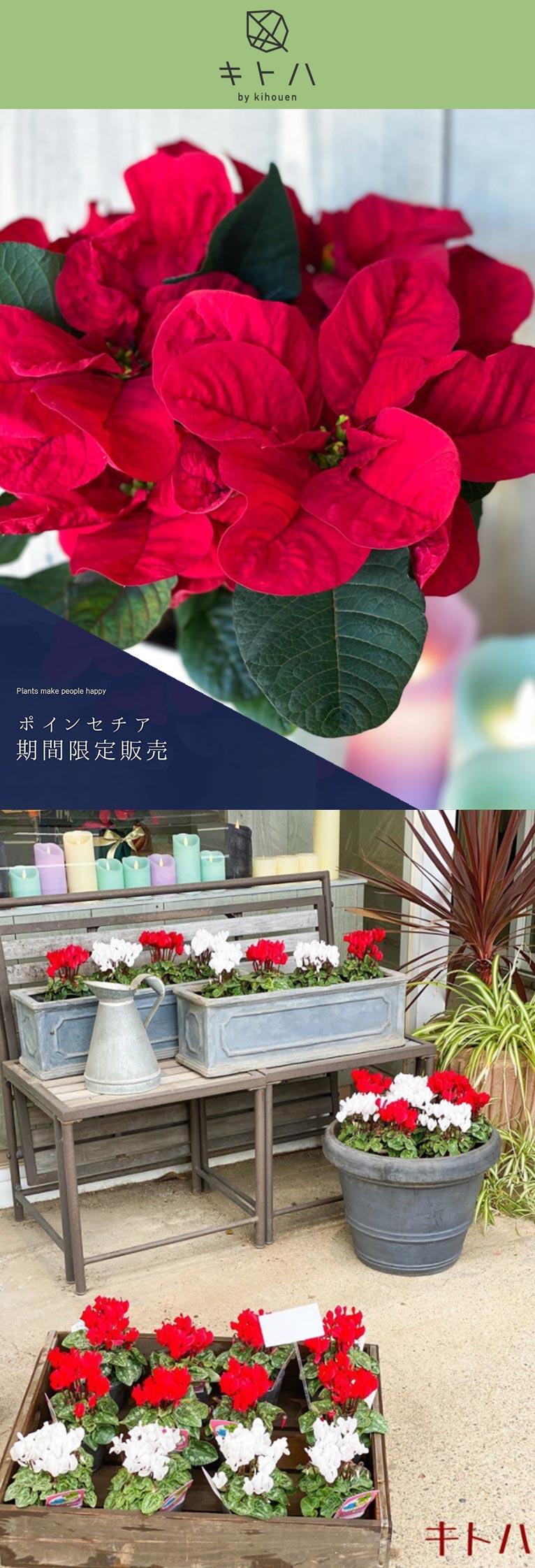 2020年12月17・19日 ~セゾンヴェール 期間限定 オープン~キトハ by kihouen 株式会社 喜芳園 width=