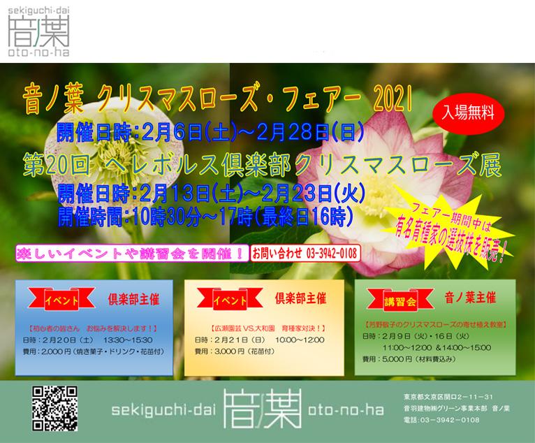 2021年2月6~28日音ノ葉・クリスマスローズフェア2021 2月13~23日ヘレボルス倶楽部・第20回クリスマスローズ展