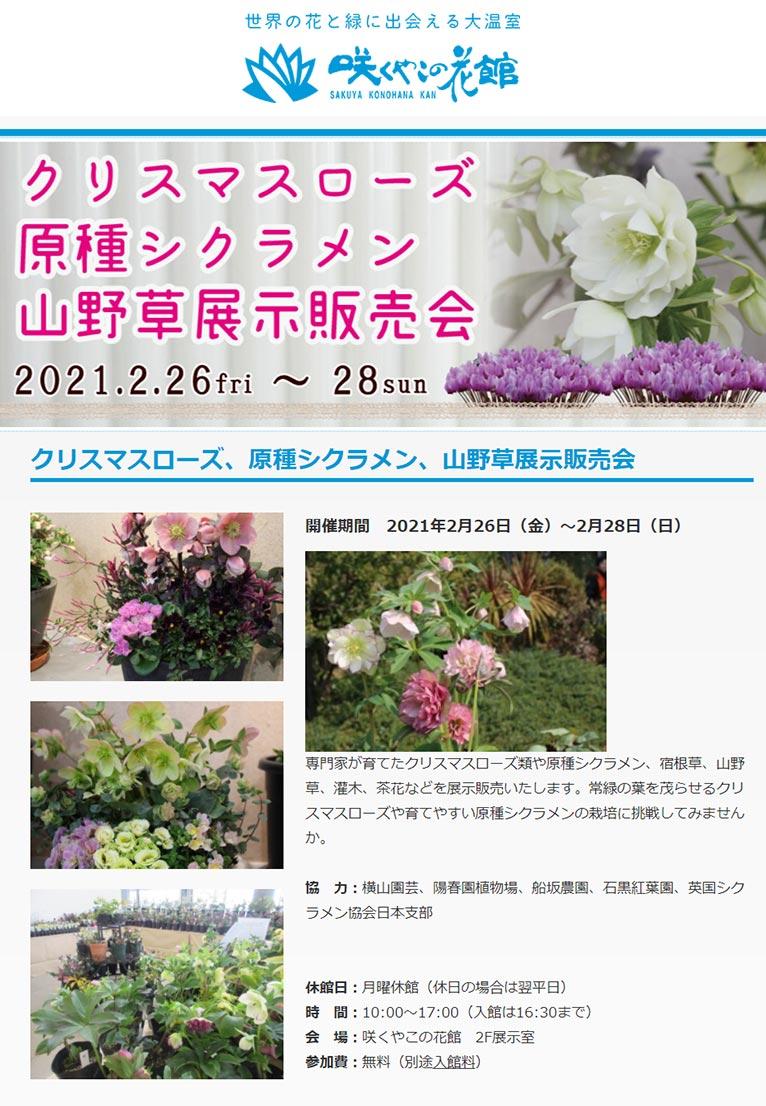 2021年2月26~28日 クリスマスローズ、原種シクラメン、山野草展示販売会 咲くやこの花館
