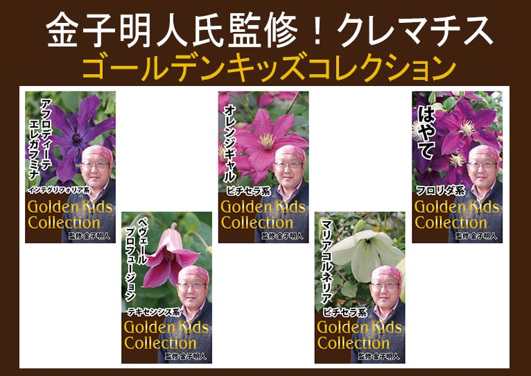 金子明人監修!クレマチス ゴールデンキッズコレクション
