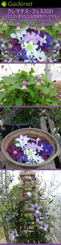 2021年3月22日~6月20日 Gadenetクレマチス・フェス2021~バラエティ豊かなつる性植物クレマチス~