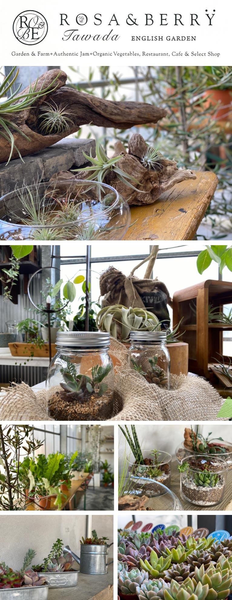 クラフト体験工房に観葉植物コーナーOPEN! ROSA & BERRY Tawada ローザンベリー多和田