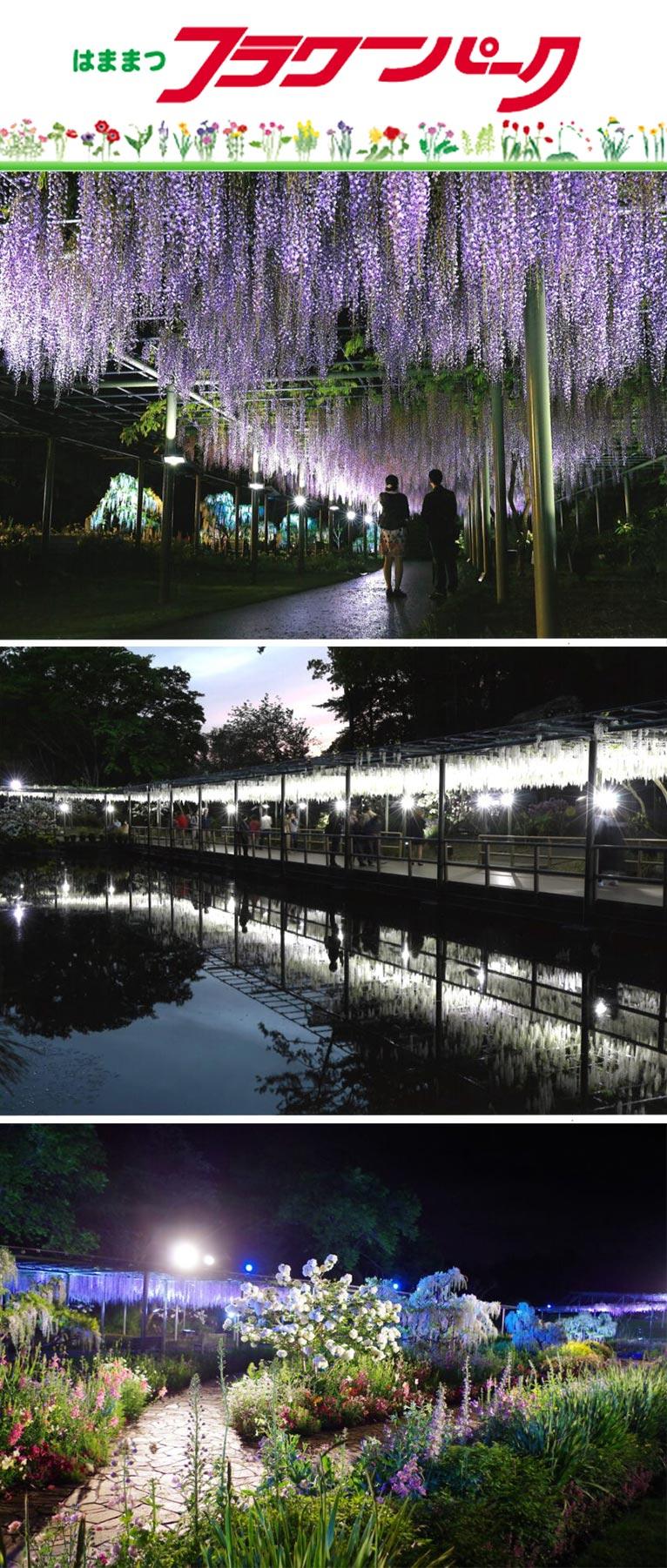 2021年4月23日~ 藤&スマイルガーデン ライトアップ はままつフラワーパーク