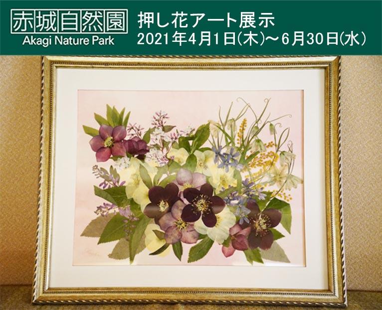 2021年4月1日~6月30日 『押し花アート展示』赤城自然園