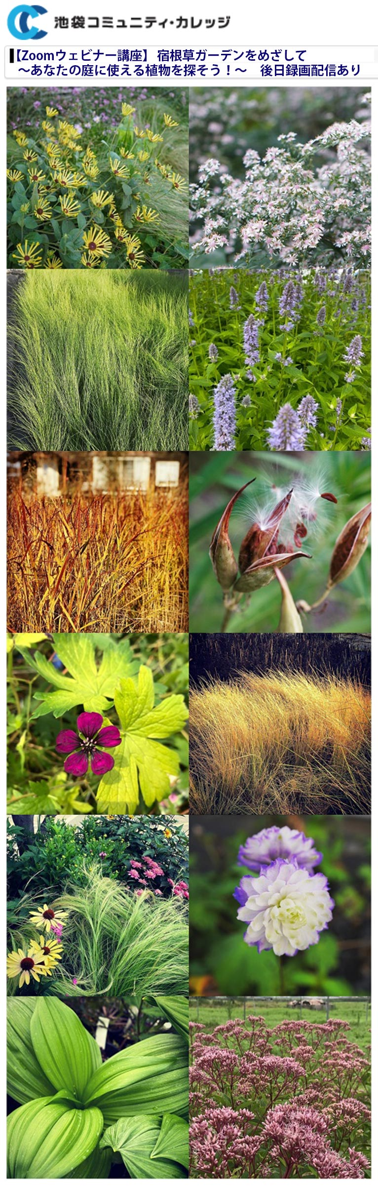 2021年6月26日 【Zoomウェビナー講座】 宿根草ガーデンをめざして~あなたの庭に使える植物を探そう!~(後日録画配信あり)講師:JGNメンバー はるはなファーム 代表 鈴木 学氏 池袋コミュニティ・カレッジ