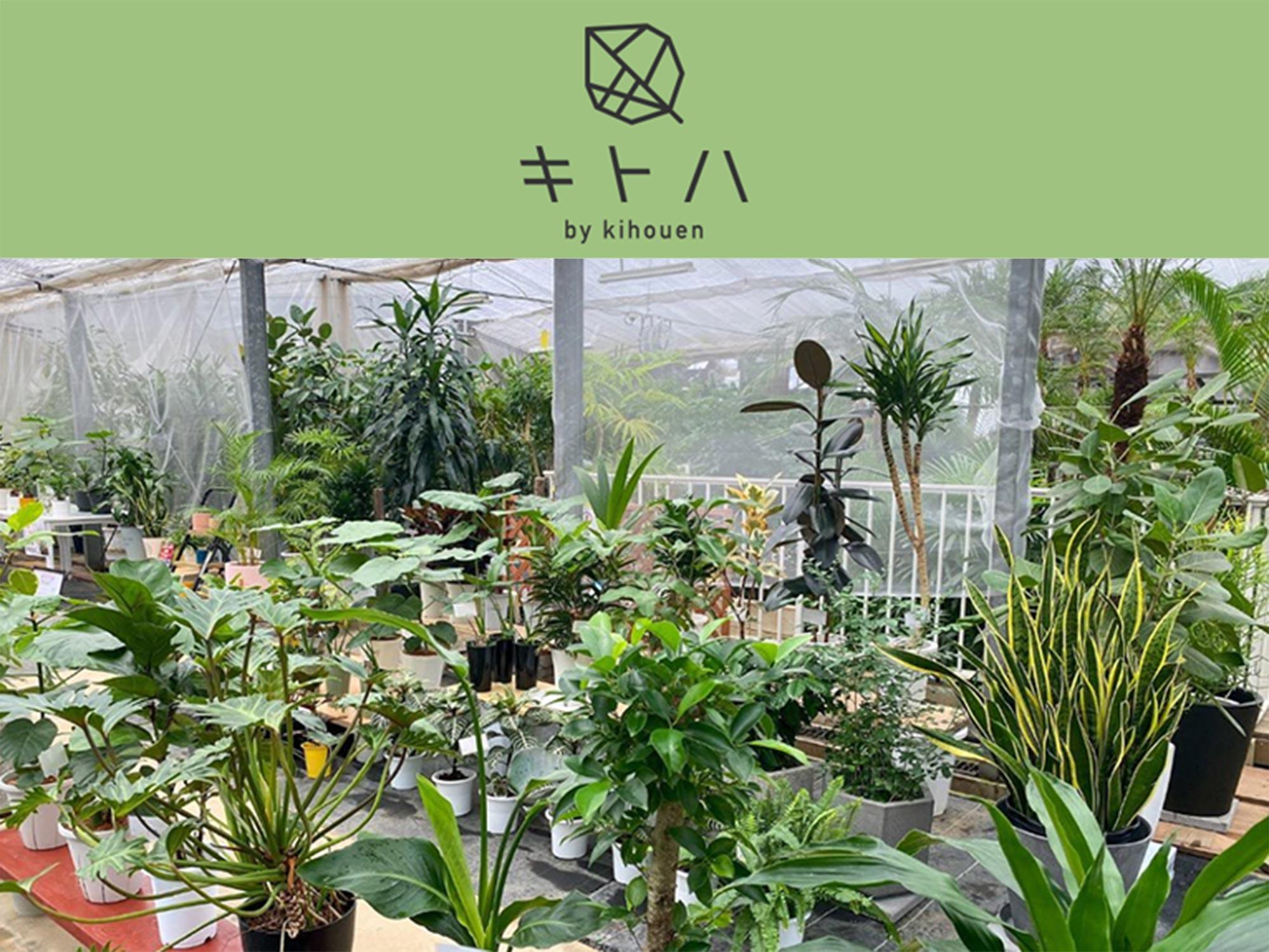 2021年7月17日~8月4日 観葉植物10%オフセール キトハ by 株式会社 喜芳園