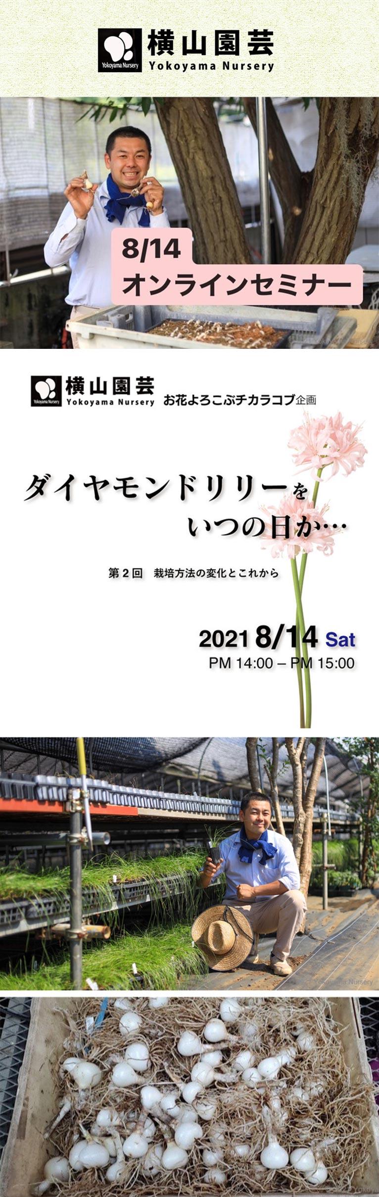 2021年8月14日オンラインセミナー横山園芸お花よろこぶチカラコブ企画ダイヤモンドリリーをいつの日か『第2回 栽培方法の変化とこれから』