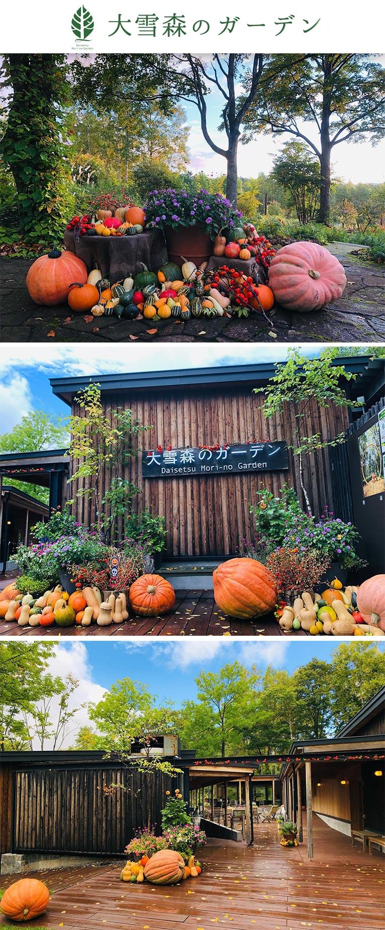 カボチャたちが2021年10月11日の営業最終日までガーデンを彩ります! 大雪森のガーデン