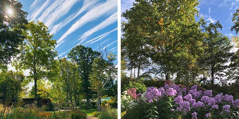 森の花園〜秋の空 大雪森のガーデン