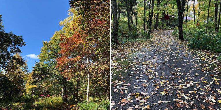 今年は山もガーデンも紅葉の見頃が早めです 大雪森のガーデン