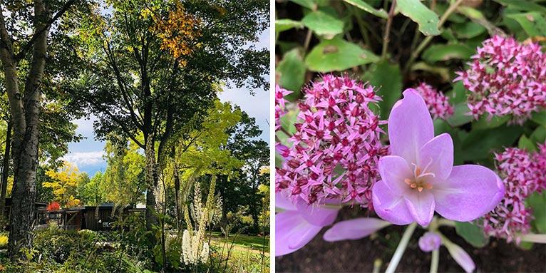 森の花園〜秋の花々 大雪森のガーデン