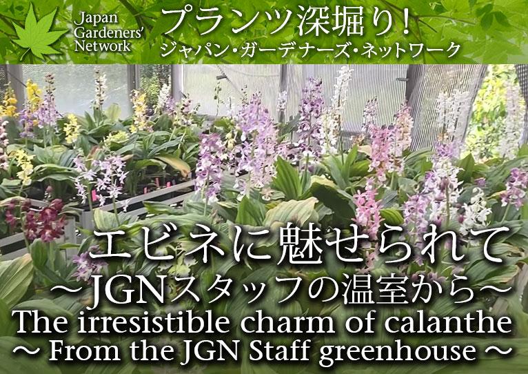 【JGN プランツ深堀り!】エビネに魅せられて~JGNスタッフの温室から~
