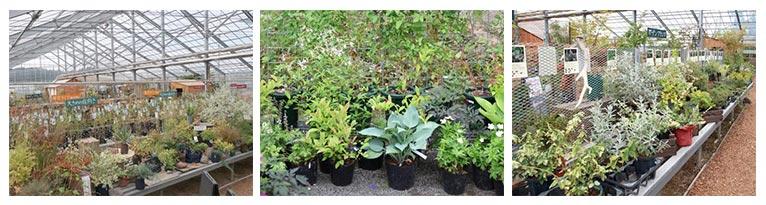 2021年9月23~26日クレマチス新苗の販売・オリジナル新品種の発売・ガーデン・レクチャー・ローズ & プランツ・マーケットも開催!及川フラグリーン